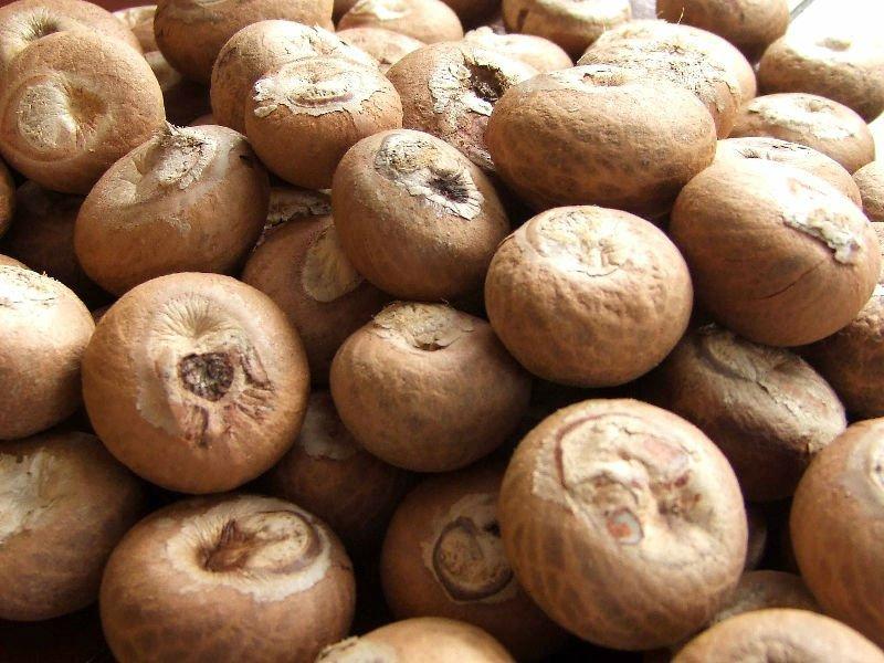 Betel Nuts El Tico